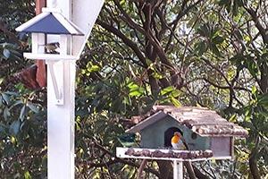 Traurige Zwischenbilanz: Weniger Vögel in den Gärten