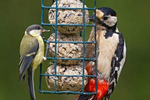Vögel füttern: So helfen Sie Vögeln durch den Winter