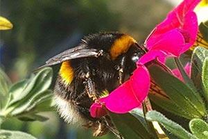 Svenja Schulze: Insekten schützt jetzt ein Gesetz