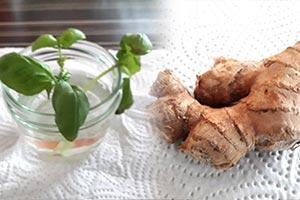 Nicht nur Trend sondern nachhaltig: Regrowing – Gemüse aus Küchenabfällen ziehen